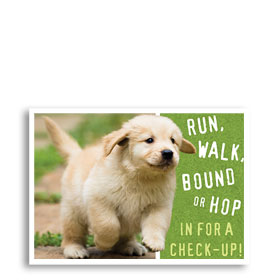 3-Up Veterinary Postcards - Run, Walk, Bound