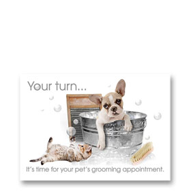 3-Up Veterinary Postcards - Bath Time
