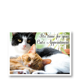 3-Up Veterinary Postcards - Cats Cuddle