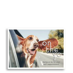 3-Up Veterinary Postcards - On the Go