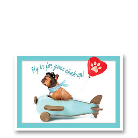 3-Up Veterinary Postcards - Fly IN