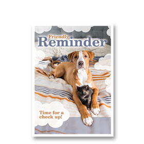 3-Up Laser Veterinary Postcards - Out of Bed