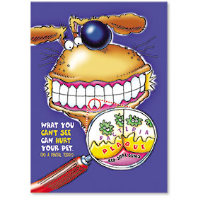 Standard Veterinary Reminder Postcards - Do A Dental Today