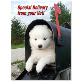Standard Veterinary Reminder Postcards - Special Delivery II