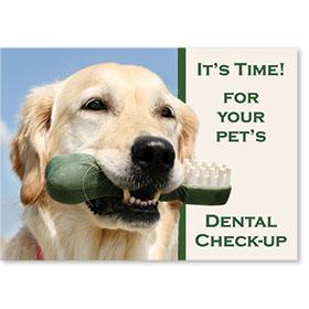 Standard Postcards-Dental Bone