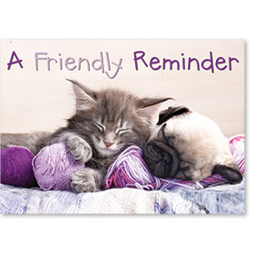 Standard Veterinary Reminder Postcards - Balls of Yarn