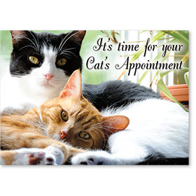 Standard Veterinary Reminder Postcards - Cats Cuddle