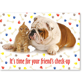 Standard Veterinary Reminder Postcards - Primary Colors
