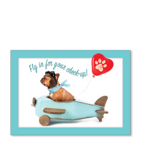 Standard Veterinary Reminder Postcards - Fly In