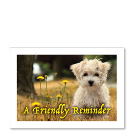 Standard Veterinary Postcards - Fluffy Friend
