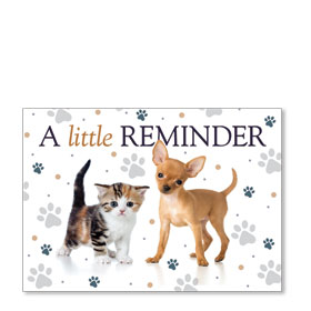 Standard Veterinary Postcards - Little Pets