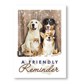 Standard Veterinary Postcards - Reminder Animals