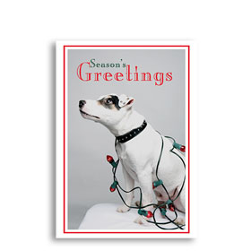 3-Up Veterinary Holiday Postcards - Holiday Lights