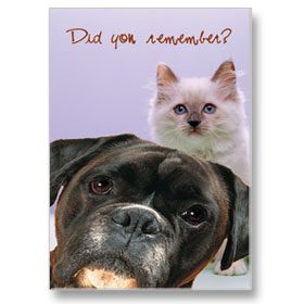4-Up Laser Veterinary Postcards - Here We Are