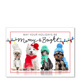 4-Up Laser Veterinary Postcards - Bright Lights