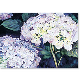 Standard Medical Postcards - Hydrangea