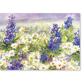 Standard Postcard-Lupine & Geraniums
