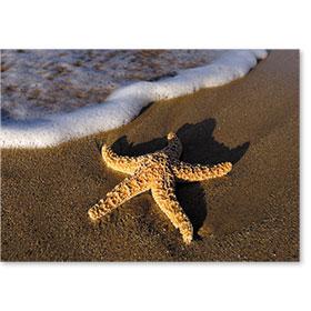 Standard Postcard-Starfish