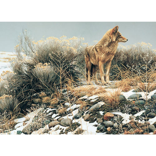 Coyote in Winter Sage 1000 Piece Jigsaw Puzzle