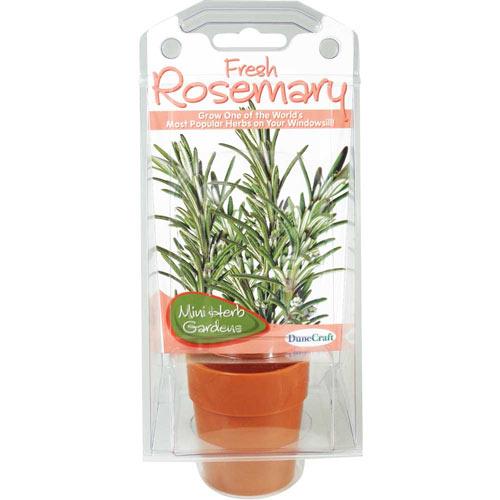 Mini Herb Gardens - Rosemary