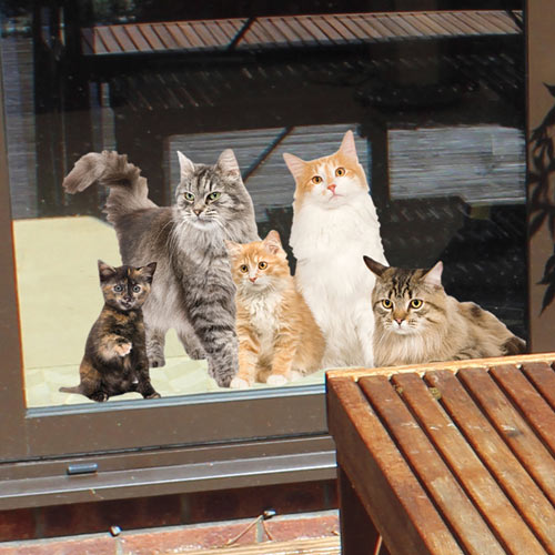 Cats Window Cling