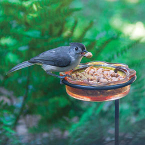 Songbird Magnet (2 lb.)