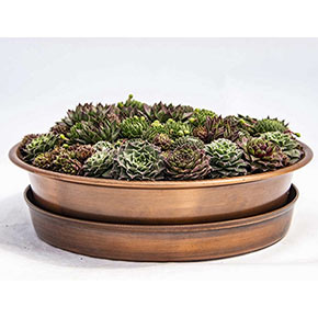 Succulents In Copper