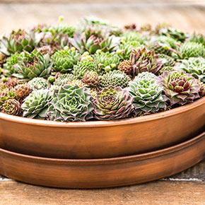 Succulents in Copper
