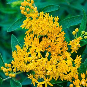 Butterfly Flower Hello Yellow
