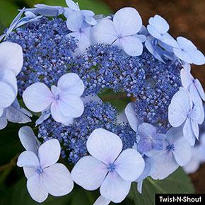 Favorite Hydrangea Sampler