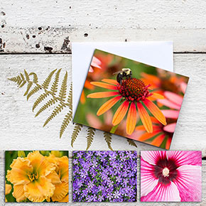 Spring Hill Nurseries® Note Cards