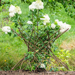 Willow Obelisk Plant Support