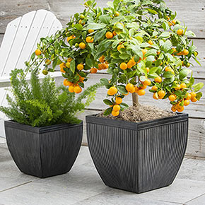 Classic Faux Lead Planter set/2