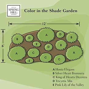 Color in the Shade Garden
