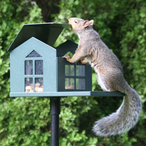 Squirrel Pantry Feeder