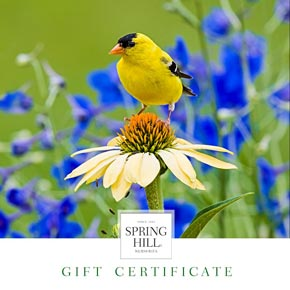 Gift certificates for sale at spring hill nurseries quick viewopens a dialog e gift certificate goldfinch design mightylinksfo