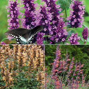 Buy New Items At Spring Hill Nurseries