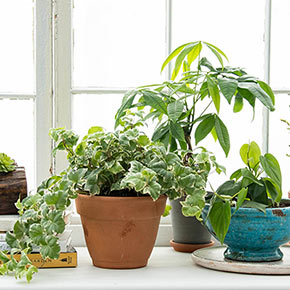 Houseplants Alive!®