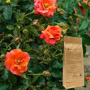 Roses Alive!™ 3 lb.