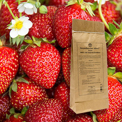 Strawberries Alive!™ 1lb.