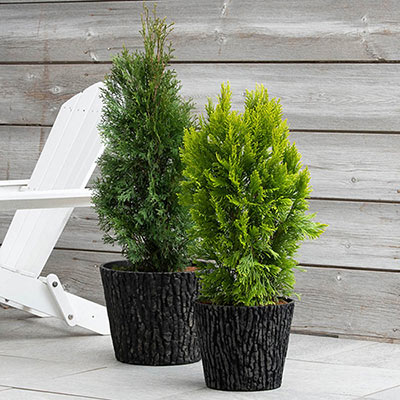 Lodge Look Planter