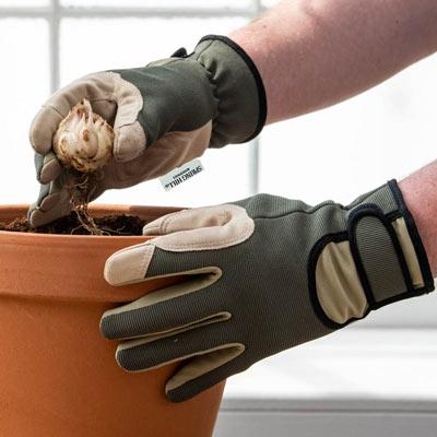 Spring Hill Standard Gloves
