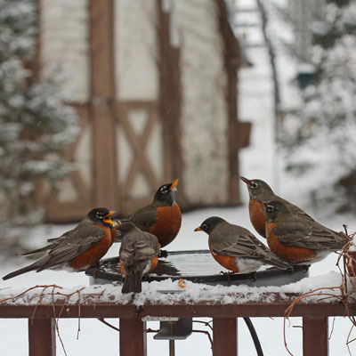 Clamp Mount Heated Bird Bath