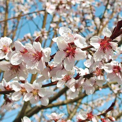 Peach Flat Wonderful™ Reachables<sup>®</sup>