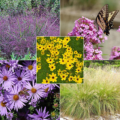 North Creek Pollinator Collection