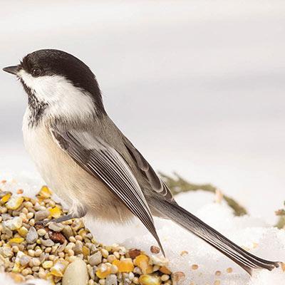 No-Waste Birdseed