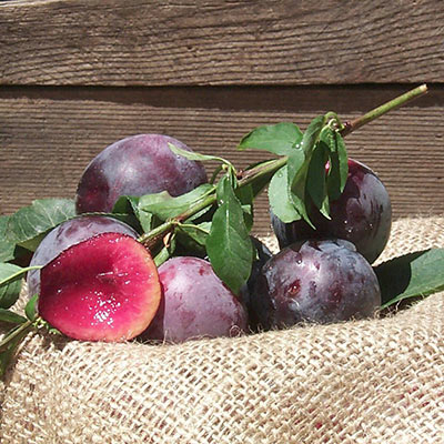 Plum Methley