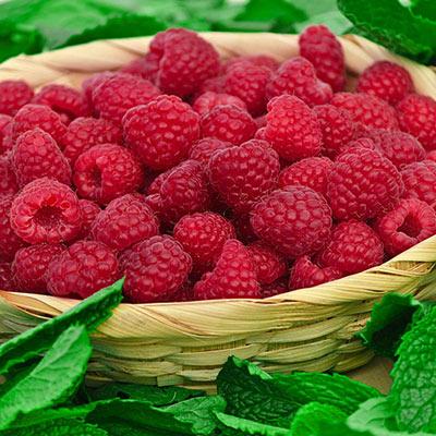 Raspberry Encore