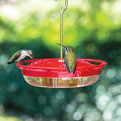 Mini High-Perch Hummingbird Feeder