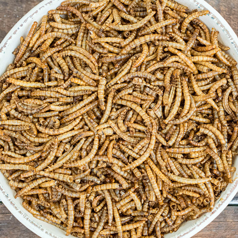 Redi-Meal  Mealworms